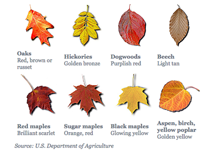 Leaf color chart